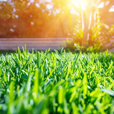 lush lawn with sunshine