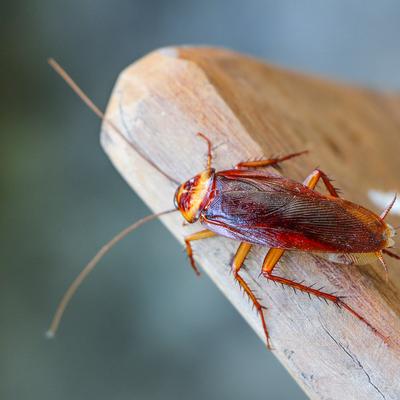 cockroach log